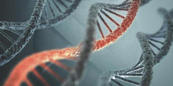 morality and mutation essay Crispr and the ethics of gene editing steven novella on december 2, 2015 shares if you have not heard of crispr yet, you should have this is a truly transformative technology that allows.